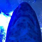 Photo of Aquarium Donostia-San Sebastian