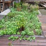 Ronces, mégots, canettes vides et autres détritus dans le jardin : aucun entretien.
