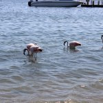 Foto de DoubleTree Resort by Hilton Hotel Paracas