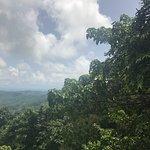 St. Lucia Rain Forest Foto