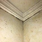 mold/mildew