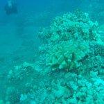 Diving with Cory (PADI) of Maui Dreams Dive Co.