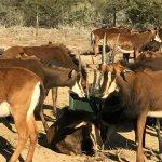 Mount Camdeboo Private Game Reserve Foto