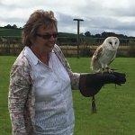 Outdoors flying Barley the Barn Owl