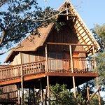 Zebra Family Tree House