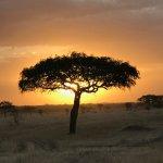 Sunset in the Western Serengeti