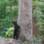 Baby bear at the bottom of tree