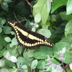 The Butterfly garden was worth it if your a person who likes this kind of thing! The butterflies