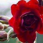 Foto di Whetstone Park / Park of Roses