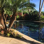 Pineapple Inn Foto