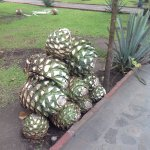 Photo of Tequila Tours