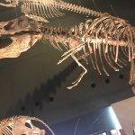 Kanagawa Prefectural Museum of Natural History Foto