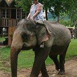 Elephant Village Sanctuary Day Trips Foto