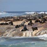 Photo of Duiker Island