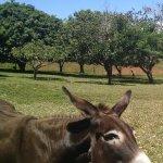 Cody feeding one of the donkeys.
