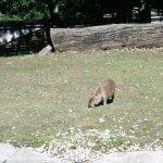 Photo de Zoo Brno