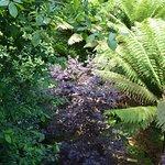 Jungle area