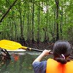 Photo of Natasha's Mangrove Nature Tour