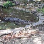 Photo of Johor Zoo