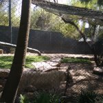 Tigers at the Mirage