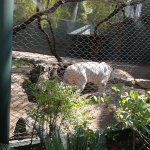 Photo de White Tiger Habitat at the Mirage