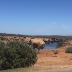 Lots and lots of elephants