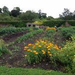 kitchen garden and shed