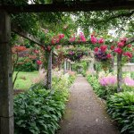wisteria and rose tunnel