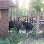 more Moose...