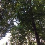 Vues de la terrasse du Mirabeau
