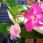 ภาพถ่ายของ B&B La Mimosa del Golfo