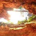 Les Acacias Bellevue Foto