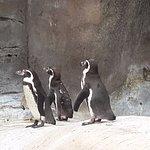 Penguin walking in a queue