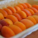 Those apricots!