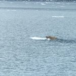 Photo of 26 Glacier Cruise by Phillips Cruises and Tours