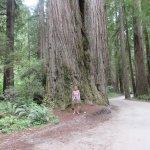 Photo of Jedediah Smith Redwoods State Park