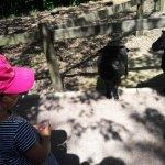 Photo of Zoo de Champrepus