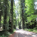 Redwood National Park Foto