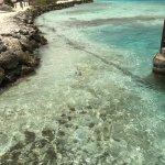 Foto de De Palm Island