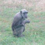 Monkey Collecting Food