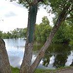 Дерево на фоне пруда в Тарханах