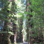 Hyggelig skovtur
