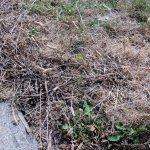 Grass that is in bad shape