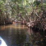mangroves trails