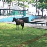 cheval, pétanque ou tennis de nombreux loisirs à votre disposition