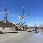 Driftwood beach, end of the island