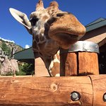 Loved getting up close and feeding the Giraffes.