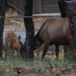 Visitors at the Maswik Lodge