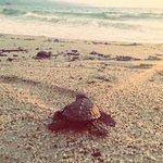 turtle release