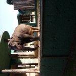 Photo of RioZoo - Rio de Janeiro's Zoo